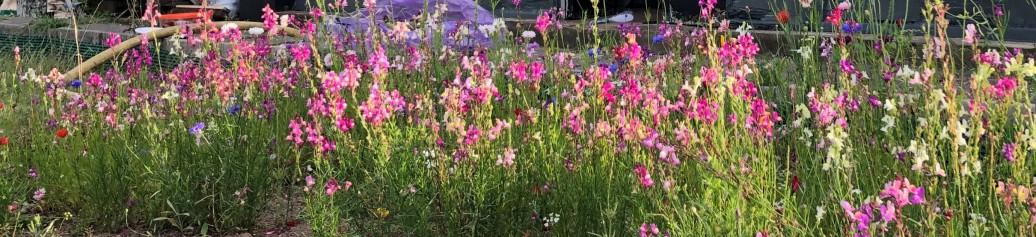 wildflowers full
